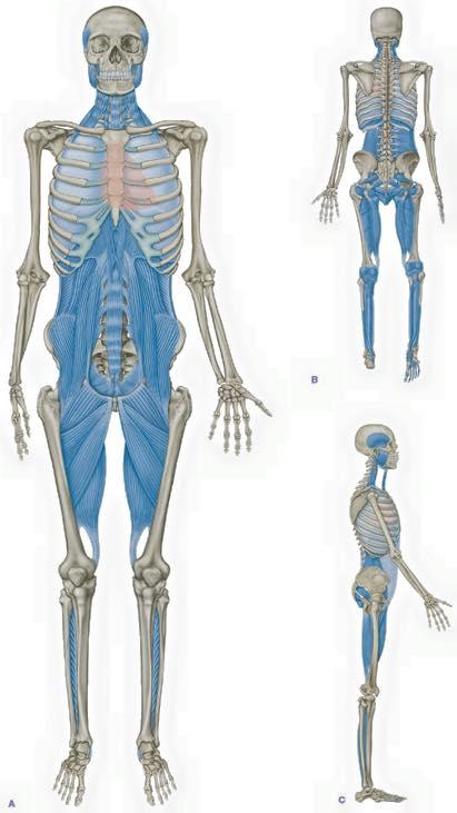 Optimum Body Mechanic – Week 6